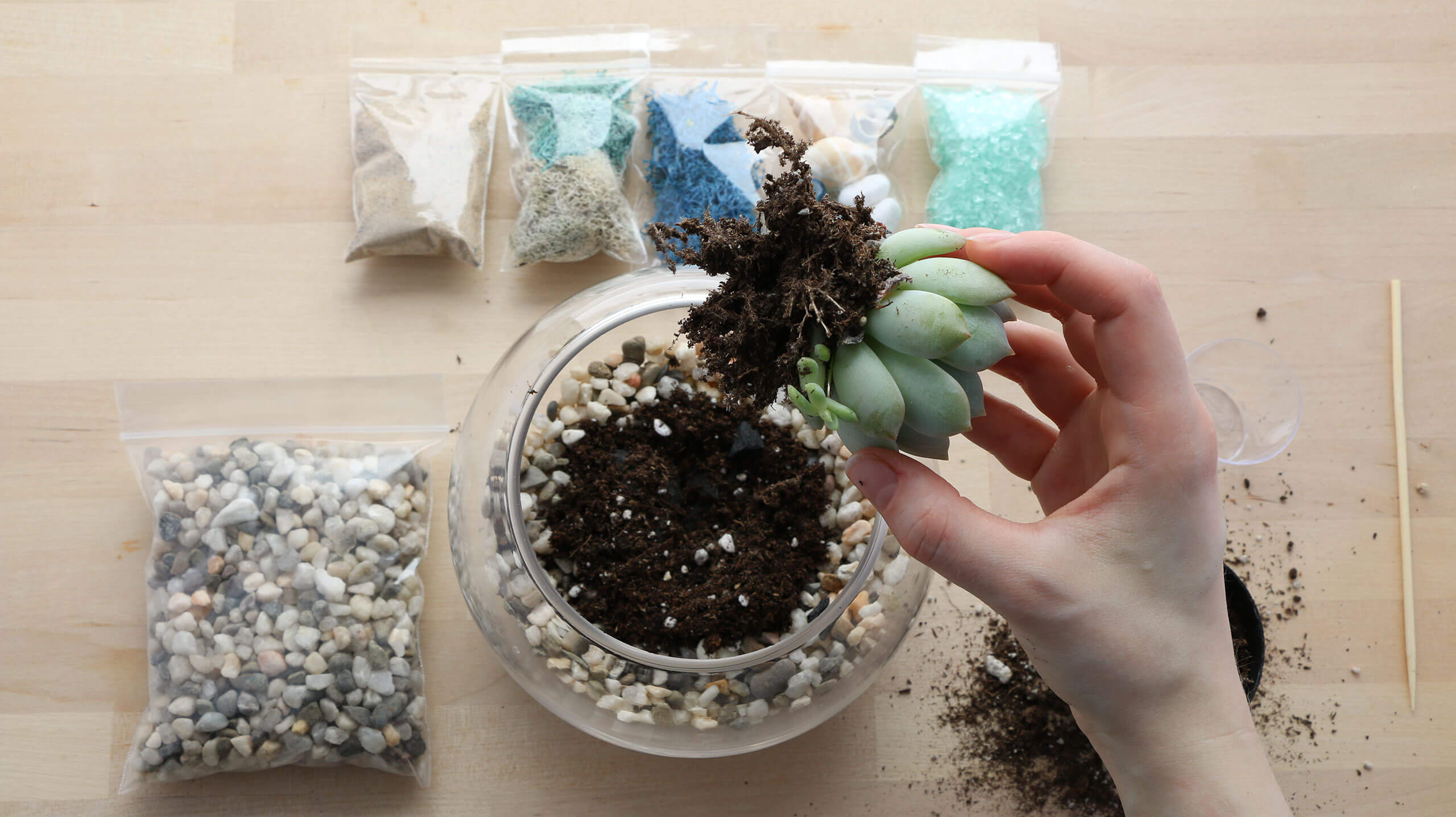 Plant Life Succulent Terrarium Kits And Workshops